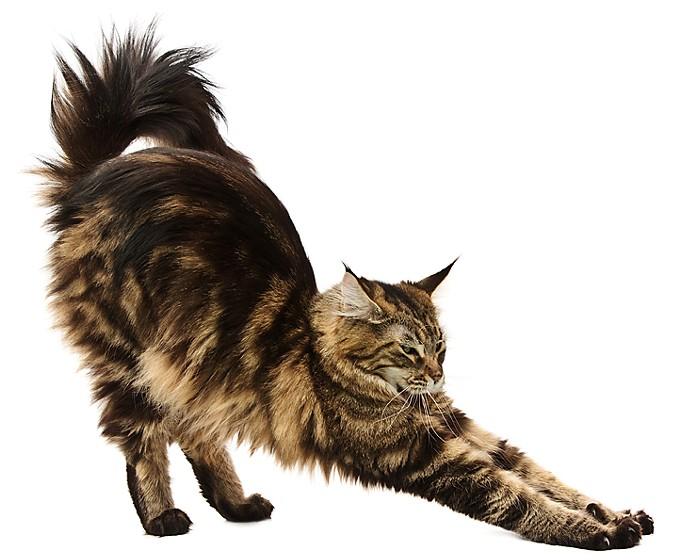 stretchingcat-cropweb.jpg