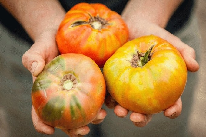 heirloom_tomatoes1.jpg