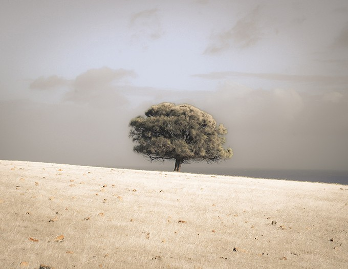"""Lone She-Oak by Ocean, Kangaroo Island, South Australia,"" hand-colored archival pigment print © Kate Breakey. Showing at the Tucson Botanical Gardens Legacy Gallery through Jan. 13"