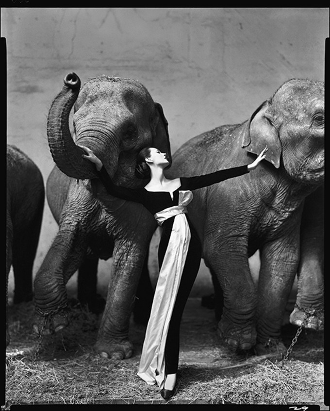 """Dovima with Elephants, at Cirque D'Hiver, Paris,"" August, 1955, by Richard Avedon, whose work is on display at the Center for Creative Photography through May 11."