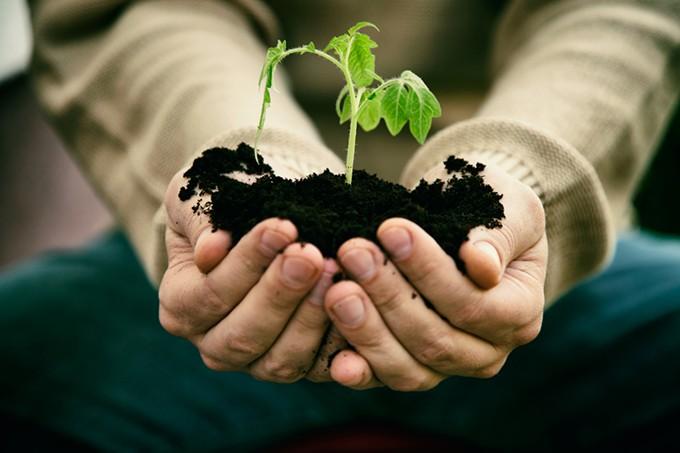 bigstock-garden-seedling-85859579.jpg