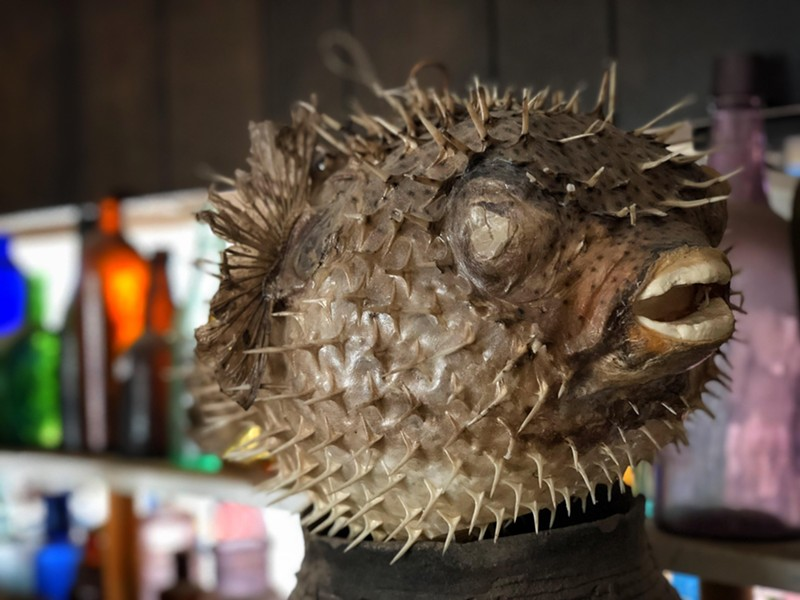A blowfish. - BRIAN SMITH