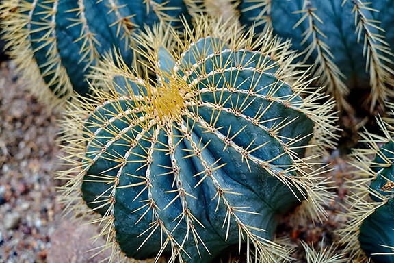 Just like every night has it's dawn, just like every cowboy sings his sad, sad song... every cactus has its thorns.