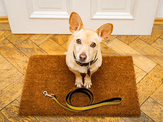 bigstock-dogs-behind-bars-in-jail-priso-224141326.jpg