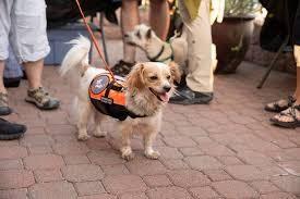 Doggie Shorts Encore Event.