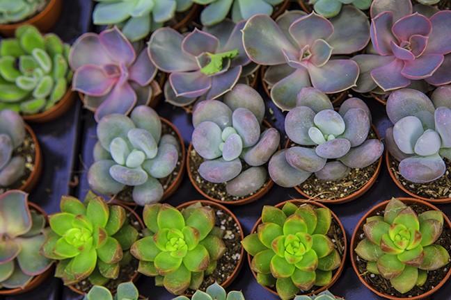 monsoon_plant_sale.jpg