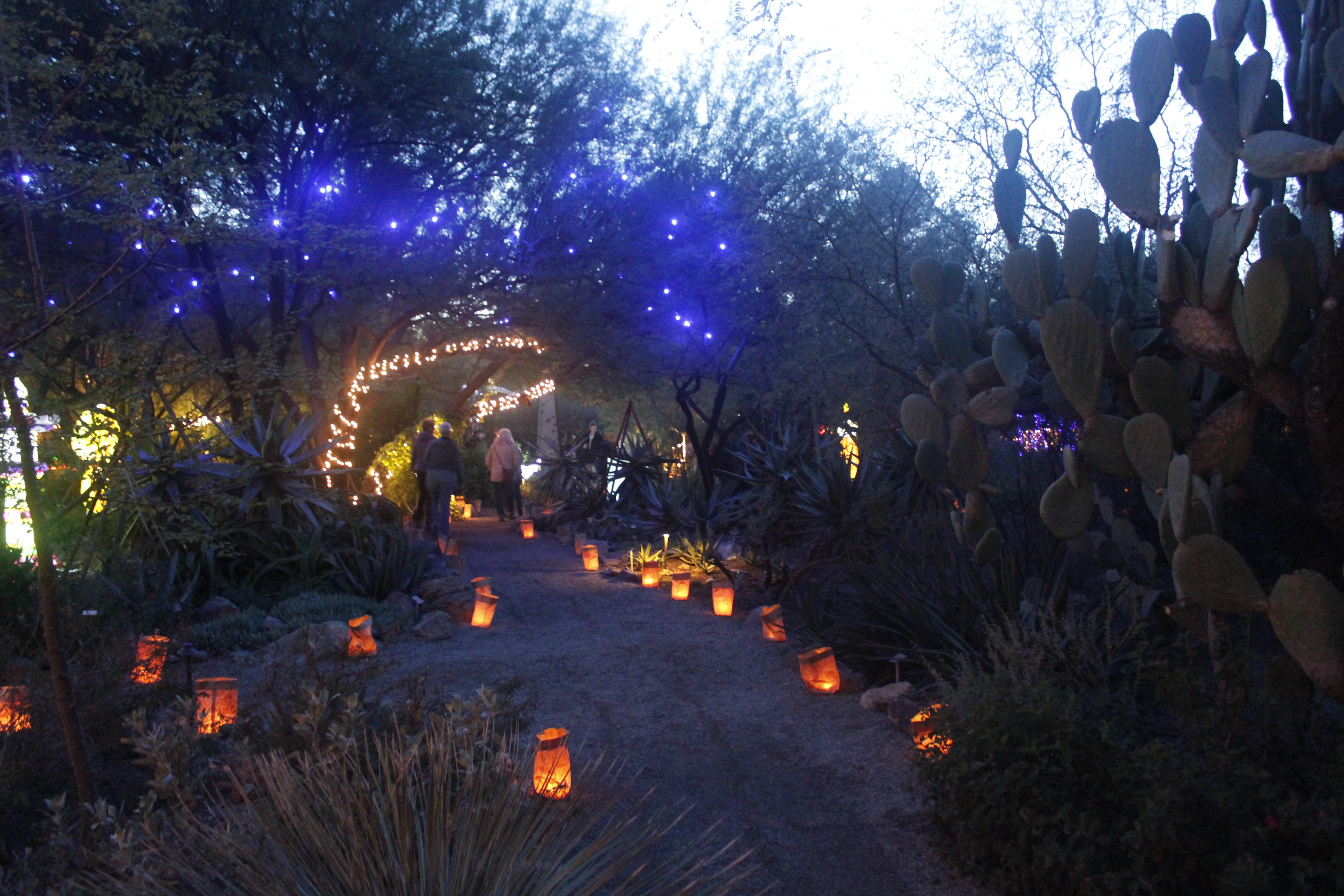 luminaria nights - Tucson Botanical Gardens Luminaria Night 2019