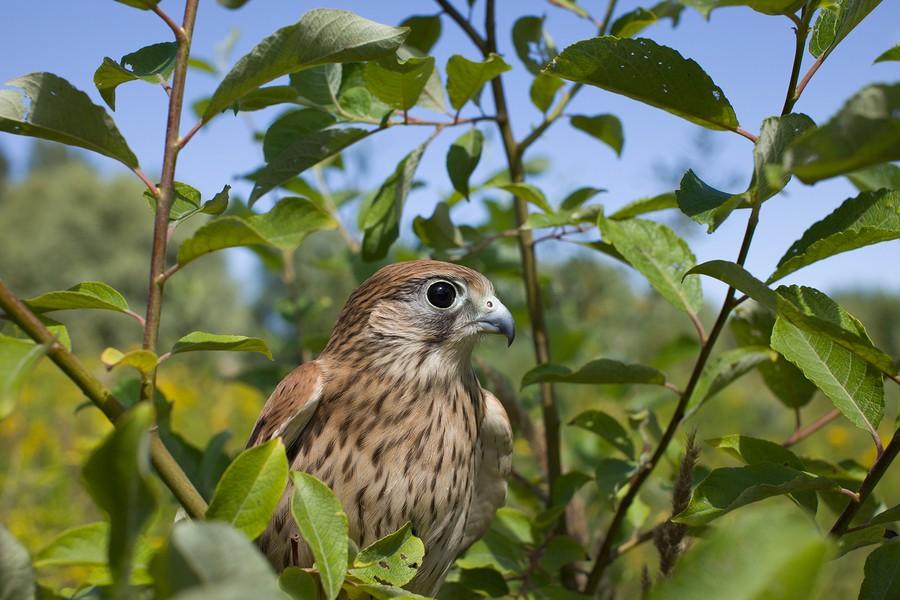 bigstock-animal-avian-beak-beauty-b-329005705.jpg