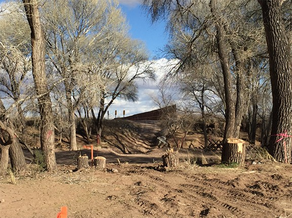 Cottonwood trees at the San Pedro River were cut down to make way for the border wall.
