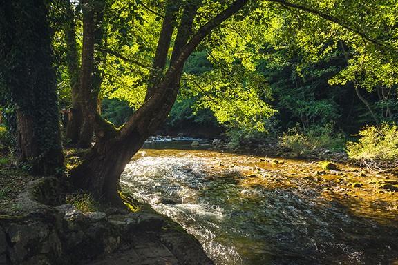 bigstock-nature-rainforest-river-cascad-322402600.jpg