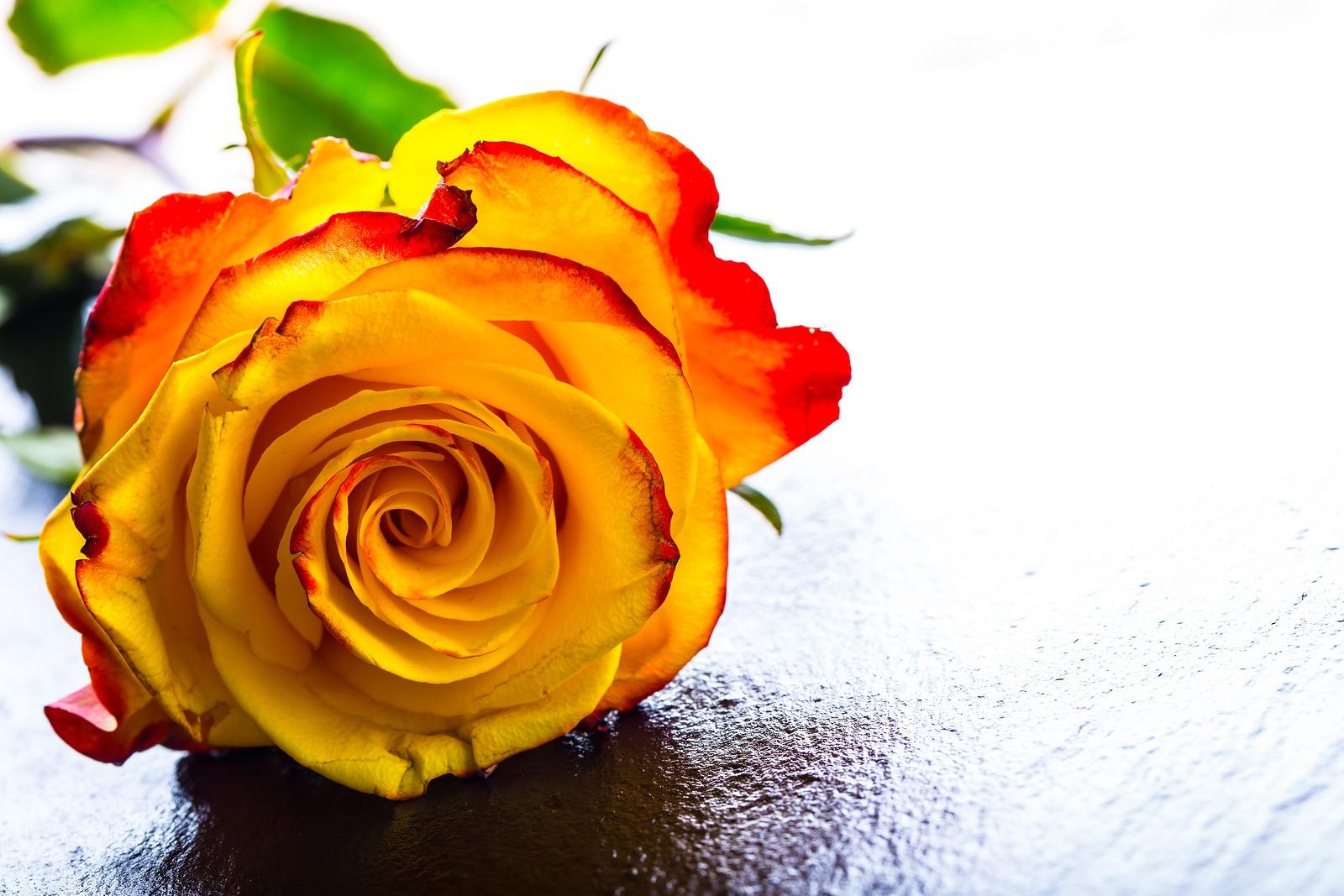 Roses Need Love City Week Tucson Weekly