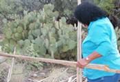 Saguaro Bounty