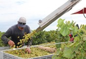 Wine Winners: Off the Vine Presses Back into Oro Valley