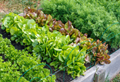 Aridlands Gardening: What and How to Plant