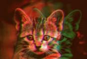 The Cat Video Fest 2020!