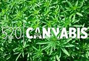 MMJ: Crickets for Cannabis