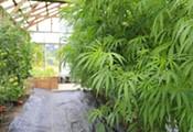 News21: America's Weed Rush
