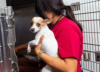 PACC Drops Adoption Fees for Clear the Shelters drive