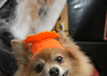 Trick-or-Treat with a Pet in Need
