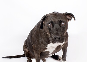 Adoptable Pet: Chance Needs a Home