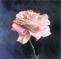 © KATE BREAKEY, COURTESY ETHERTON GALLERY - Kate Breakey, Rosa Felicia, Pink Rose (Grandiflora), 1999 hand-colored gelatin silver print
