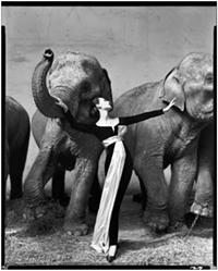Richard AvedonDovima with elephants, evening dress by Dior, Cirque d'Hiver, Paris, August 1955© The Richard Avedon Foundation - Uploaded by Brigette Villaseñor