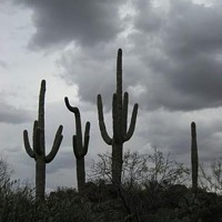 saguaro_jpeg-magnum.jpg